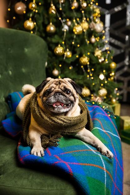 Alto, ângulo, cão, desgastar, cachecol, vista Foto gratuita