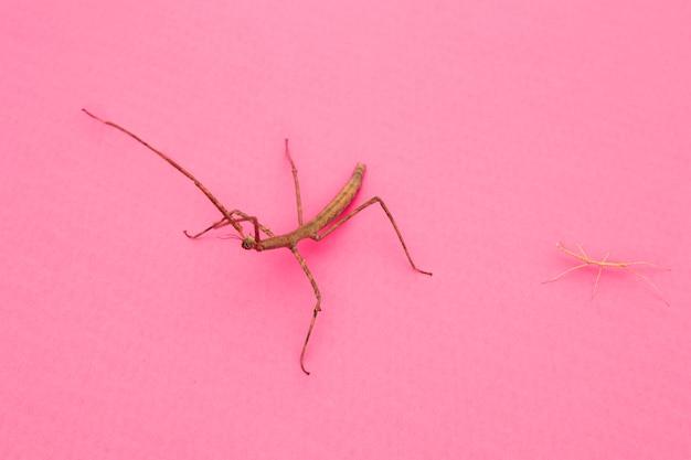 Alto ângulo de inseto mantis de aparência estranha Foto gratuita