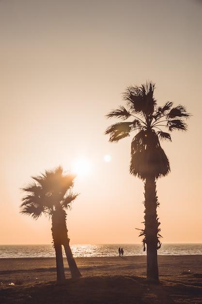 Amantes andando de mãos dadas, observando o pôr do sol. a praia tem dois coqueiros muito altos. almerimar, almeria, espanha Foto Premium