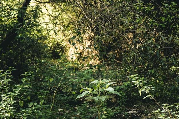 Ambiente de madeira clara de pinho da árvore de primavera Foto gratuita