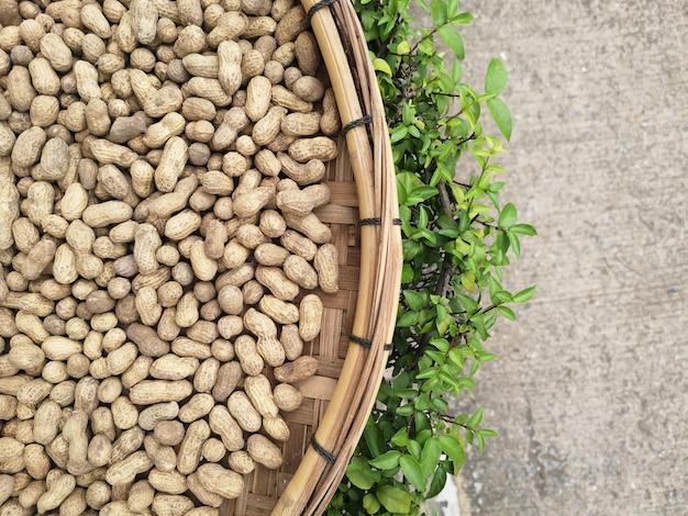 Amendoim cru sun banho para secar. para ser processado em manteiga de amendoim. Foto Premium