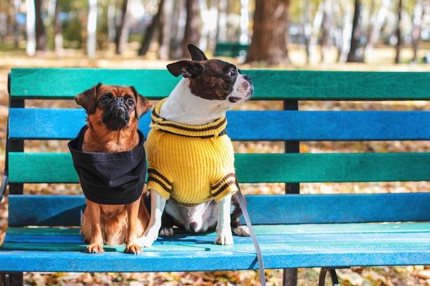 Dois cachorros sentados em um banco de madeira