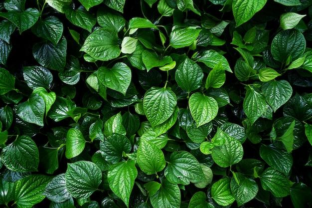 Amo o conceito de terra. fundo de folha verde Foto Premium