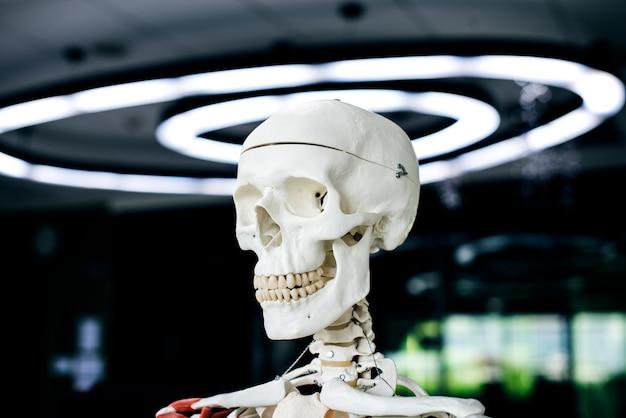 Anatomia De Estrutura De Ossos Esqueleto Humano Baixar