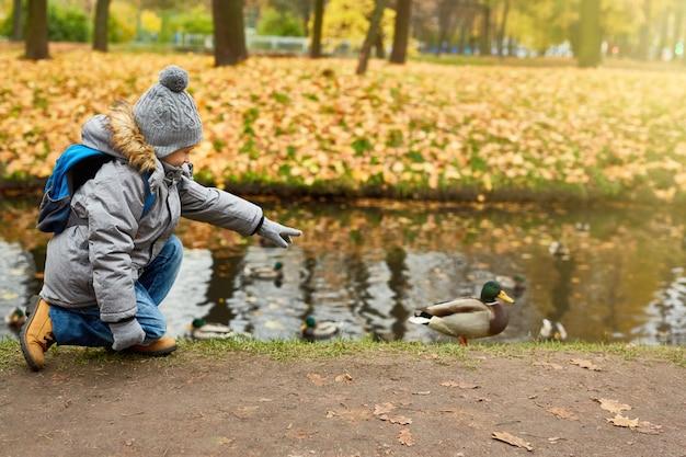 Andar após o pato Foto gratuita