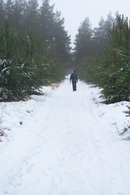 Ande na floresta de abetos de inverno. Foto Premium