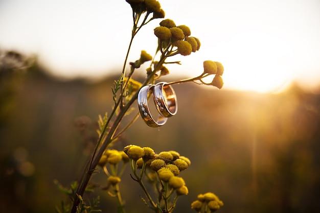 Anéis de casamento closeup na filial Foto Premium