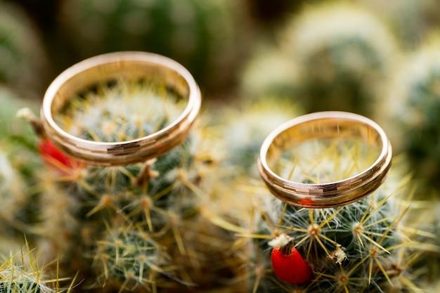 Anéis de ouro do casamento no cacto com frutas alaranjadas. amor, conceito de casamento. vista lateral. Foto Premium