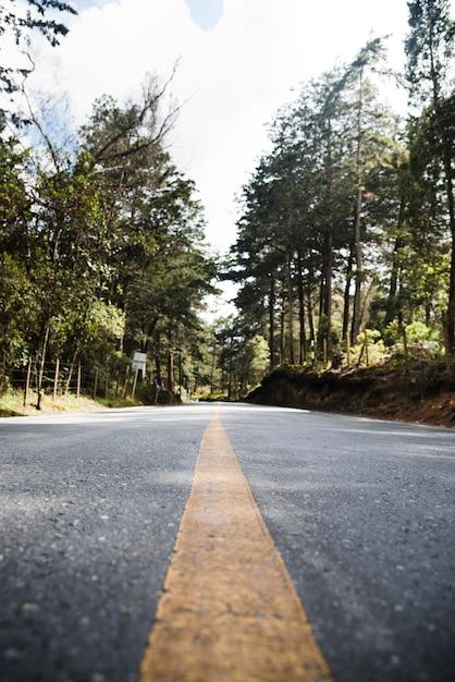 Ângulo baixo da estrada florestal da paisagem Foto gratuita