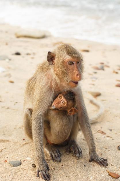 Animais e vida selvagem. macaca mãe carrega pequeno macaco filhote Foto Premium