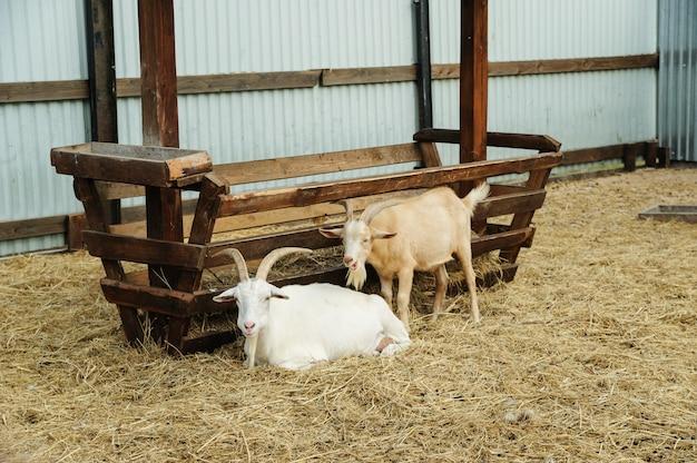 Animais em cativeiro. Foto Premium