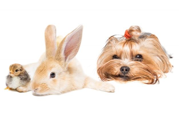 Animais em fundo branco Foto Premium
