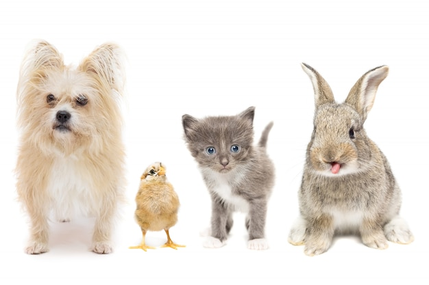 Animais em um fundo branco Foto Premium