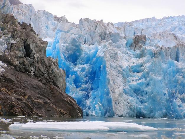 Animais selvagens do terror da geleira de ford do braço de tracy. sudeste do alasca, eua Foto Premium