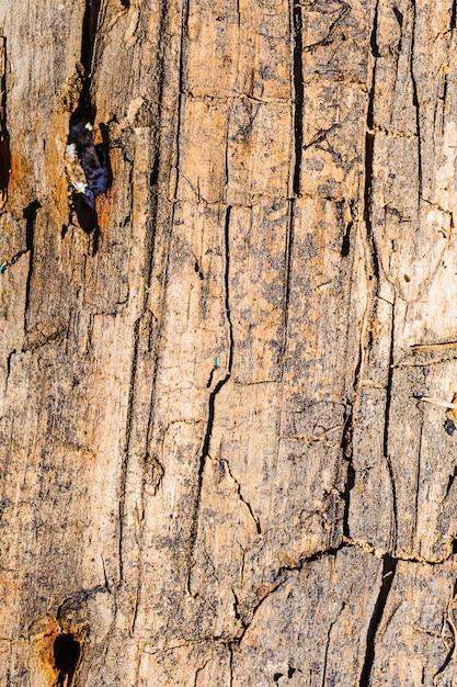 Antiga superfície rachada de uma placa de madeira Foto Premium