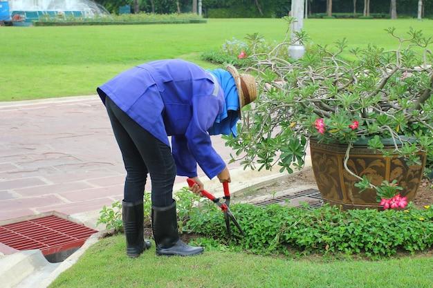 Aparamento de grama gramado, cortes arbusto verde com uma tesoura Foto Premium