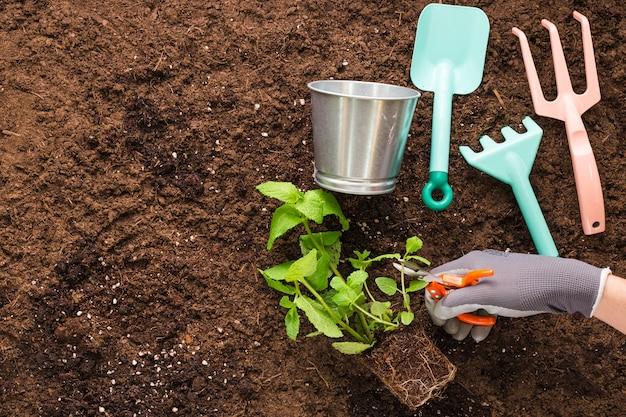 Apartamento leigos de plantas e ferramentas de jardim com copyspace Foto gratuita