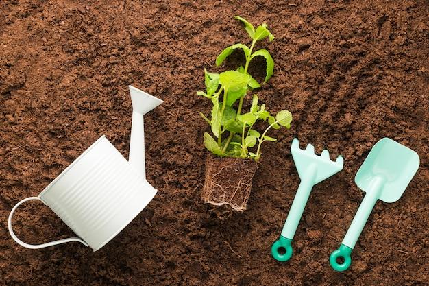 Apartamento leigos de plantas e ferramentas de jardinagem Foto gratuita