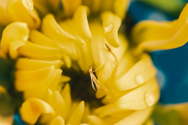 Apartamento leigos flor amarela extrema close-up Foto gratuita