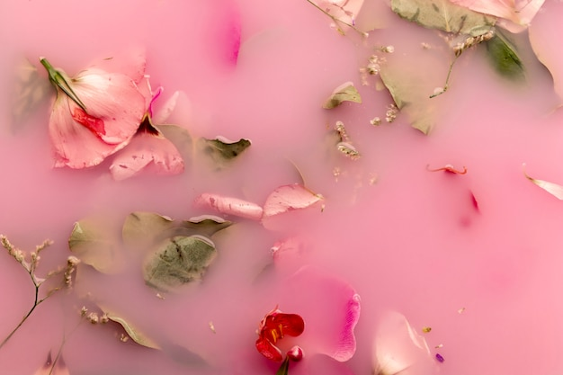 Apartamento leigos orquídeas e rosas na água cor-de-rosa Foto gratuita
