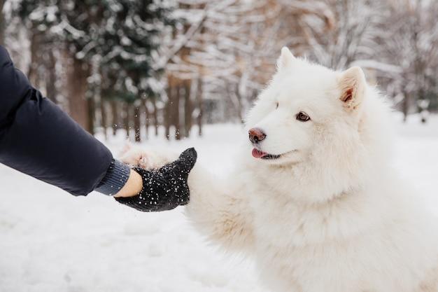 Aperto de mão com cachorro branco. proprietário com cão de pedigree na floresta Foto Premium