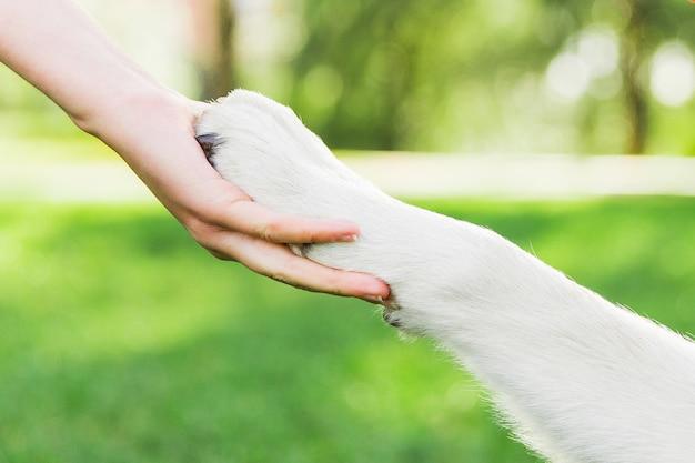 Aperto de mão com cachorro. pata do cão na mão da fêmea. cachorro, com, dono, parque Foto Premium