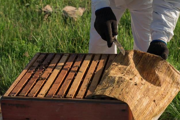 Apicultor abre a colméia, molduras com favos de mel e tecido com própolis são visíveis Foto Premium
