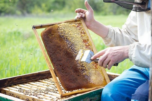 Apicultor limpa quadros de mel. um homem trabalha no apiário no verão. criação de abelhas Foto Premium