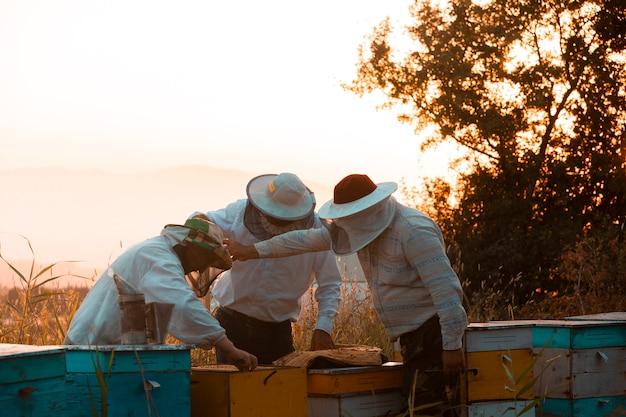 Apicultores abrindo caixas de madeira para colmeias. foto de alta qualidade Foto gratuita