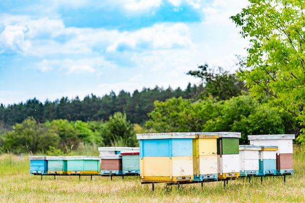 Apicultura. as abelhas enxameando e voando ao redor de sua colméia. colmeias em apiário. Foto Premium