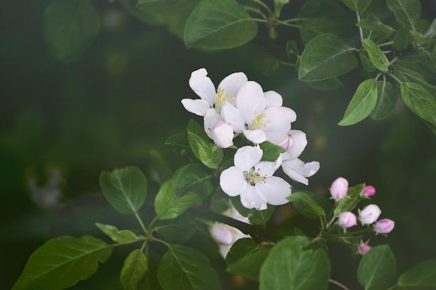 Aproxime-se com belos detalhes de flores e grama Foto Premium