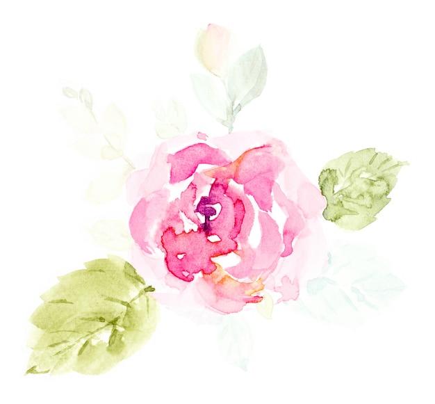 Aquarela bonito das flores do rosa de rosa pintado à mão no branco. Foto Premium