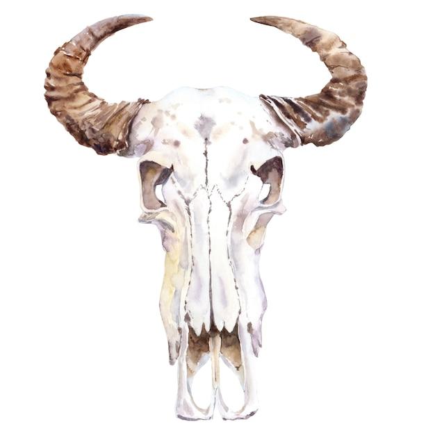 Aquarela de crânio animal. crânio de búfalo. Foto Premium