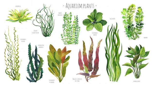Aquarela de plantas de aquário Foto Premium