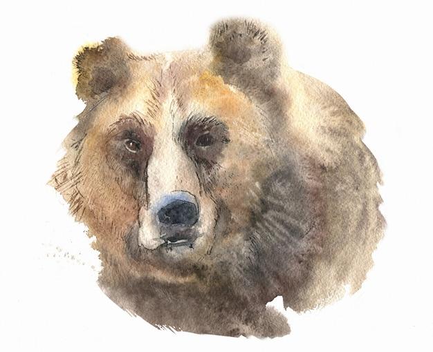 Aquarela de retrato de urso isolada no branco Foto Premium