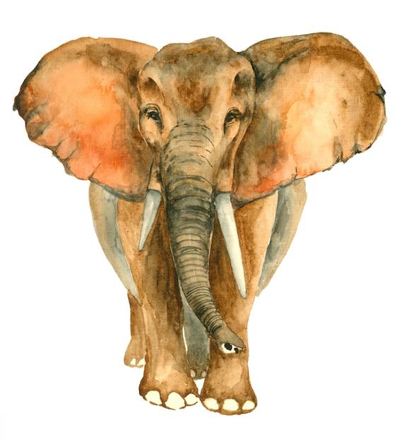 Aquarela mão desenhada elefante Foto Premium