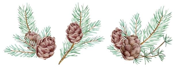 Aquarela pinho ramos e cones, agulhas em fundo branco, ilustração botânica decorativa para design, plantas de natal. cartões de ano novo Foto Premium