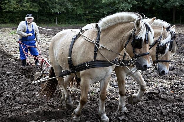 Arado cavalos de trabalho natureza lavra equina Foto gratuita