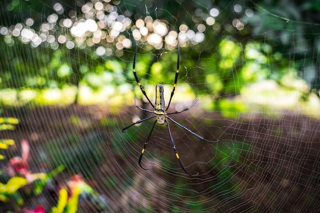 Aranha na teia de aranha na natureza de bokeh Foto Premium