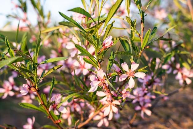 Arbustos de flores rosa Foto Premium