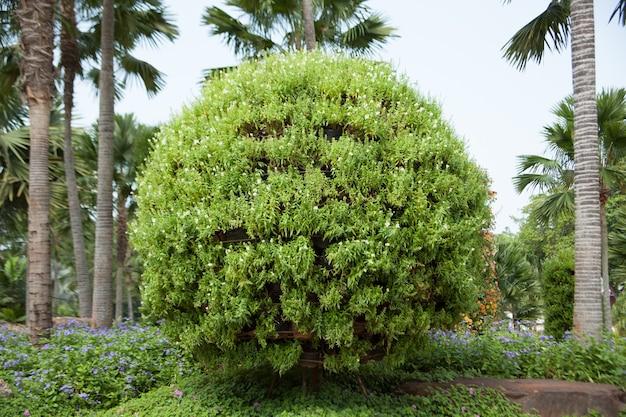 Arbustos no jardim. Foto Premium