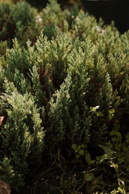 Arbustos Foto gratuita