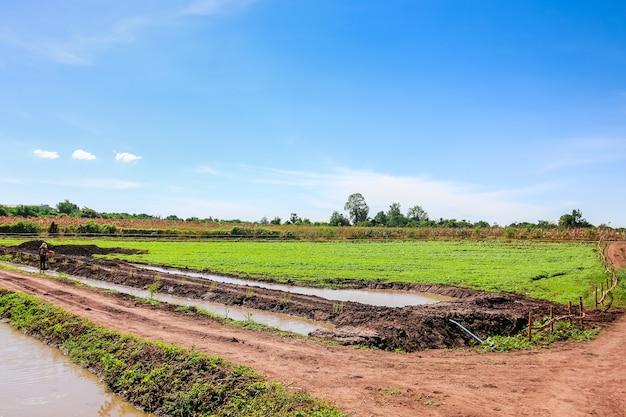 Área de agricultura na paisagem rural - lagoa, prados com céu azul e nuvens Foto Premium