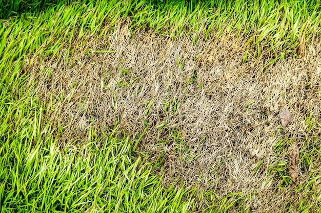 Área de grama seca não pode crescer, algo cobrir isso e não tem luz do sol Foto Premium