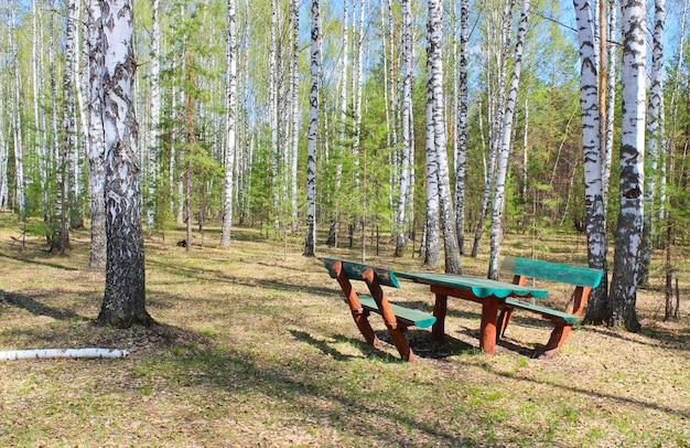 Área de piquenique em uma clareira na floresta entre o bosque de bétulas Foto Premium