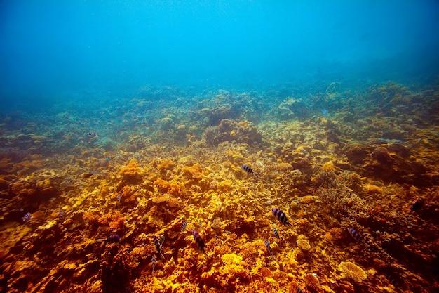 Área de recife de coral Foto gratuita