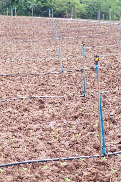 Áreas agrícolas Foto Premium