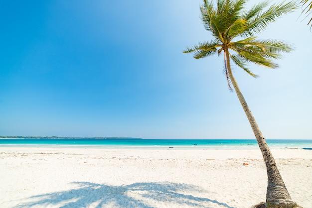 Areia branca coqueiros praia e folhas de palmeira, água azul-turquesa, paraíso tropical, destino de viagem, ilha kei, molucas, indonésia, praia deserta ninguém Foto Premium