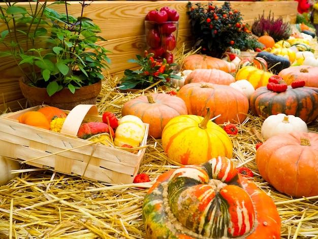 Arranjo de abóbora para venda, outono ainda vida com abóboras em madeira Foto Premium