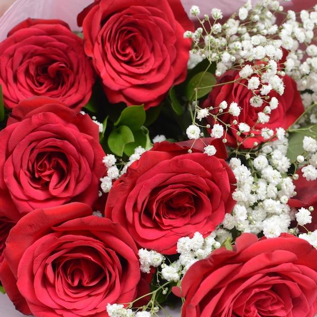 Banco de imagens : Flor, plantar, flor, pétala, vermelho ...  |Rosa Flor Vermelha